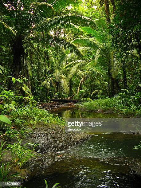 san cipriano - valle del cauca stock pictures, royalty-free photos & images