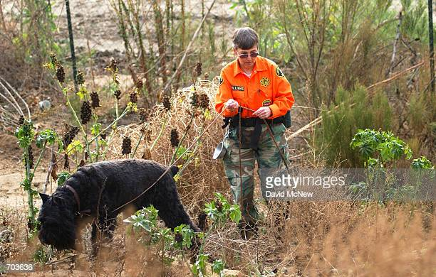 San Diego County Sheriffs search dog sniffs for possible missing parts from the decomposing body of 7yearold Danielle van Dam February 28 2002 near...
