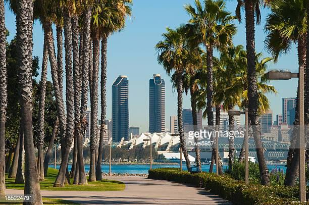 San Diego skyline and palm trees scene
