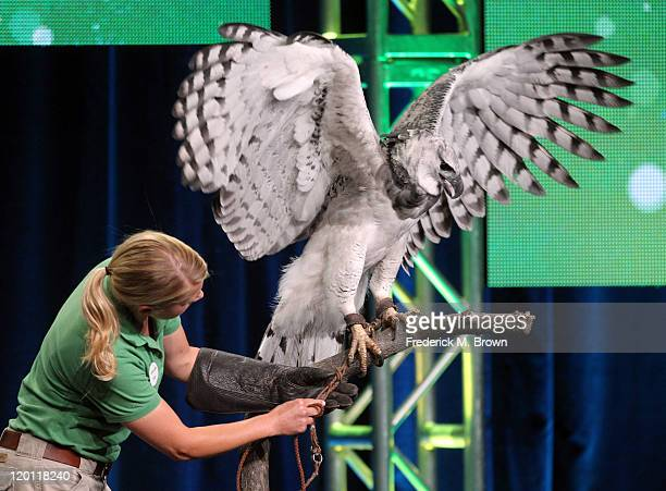 San Diego Zoo trainer Cari Clements with Toruk the Harpy Eagle speaks during the 'Nature 30th anniversary season Jungle Eagle' panel during the PBS...