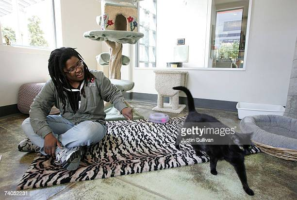 San Francisco SPCA employee Barbara Saunders plays with a cat in its apartment as it awaits adoption May 2 2007 in San Francisco California The...