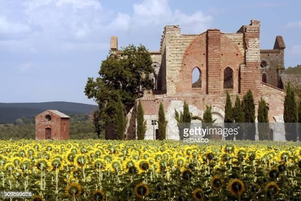 San Galgano abbey Chiusdino Tuscany Italy