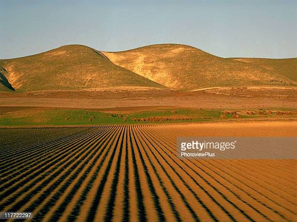 san joaquin from the pacific starlight - san joaquin valley stock pictures, royalty-free photos & images