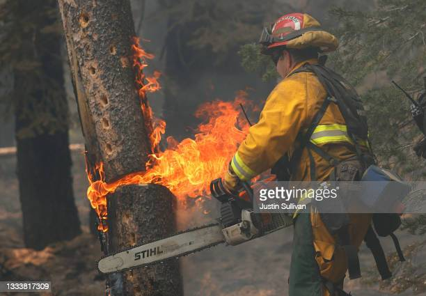 San Jose fire captain Brett Blean uses a chainsaw to cut down a tree that is on fire while battling the Dixie Fire on August 12, 2021 near Westwood,...