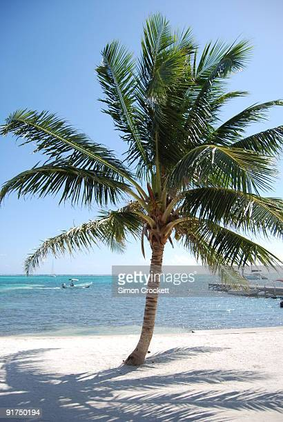 san pedro beach, ambergris caye - simon crockett stock pictures, royalty-free photos & images