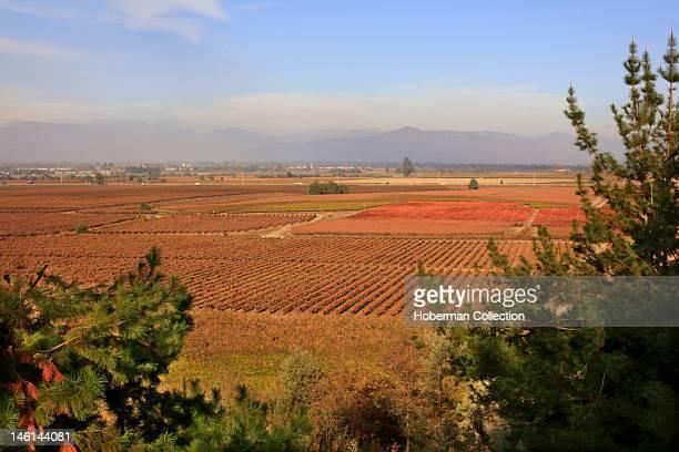 San Pedro Vineyards Chile