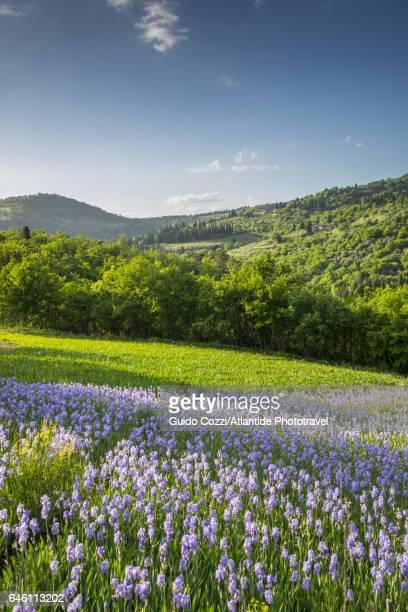 San Polo in Chianti, Iris field