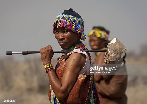 San Woman With A Tuber On A Stick in Namibia on August 22 2010 San are an ethnic group of South West Africa They live in the Kalahari Desert across...