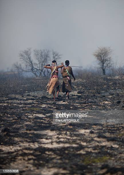 San Women Walking In The Bush After A Fire in Namibia on August 22 2010 San are an ethnic group of South West Africa They live in the Kalahari Desert...