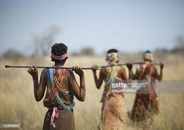 San Women Walking In The Bush in Namibia on August 22 2010 San are an ethnic group of South West Africa They live in the Kalahari Desert across the...