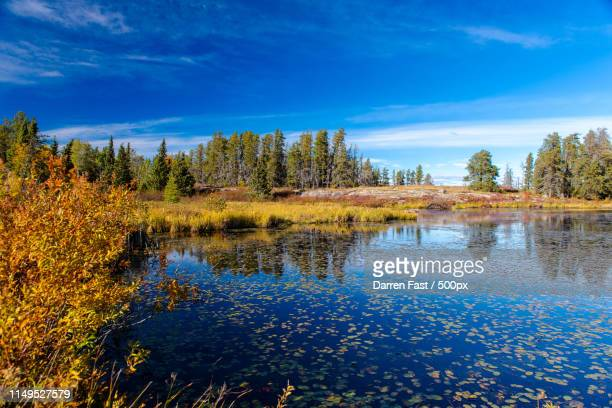 sanctuary - manitoba stock pictures, royalty-free photos & images