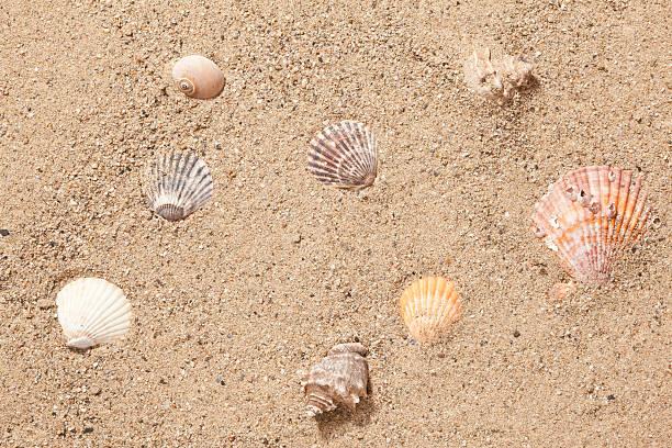 Sand And Sea Shells Wall Art