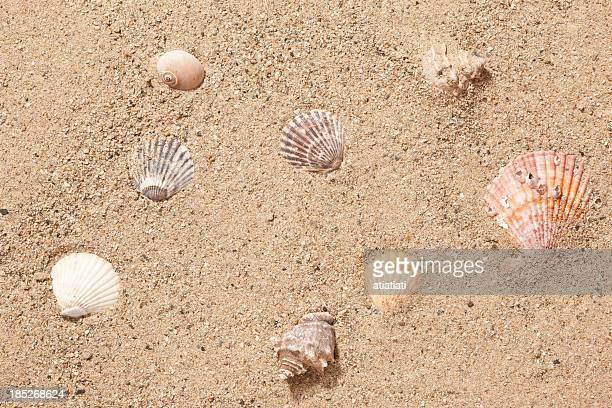 sand und Meer Muscheln