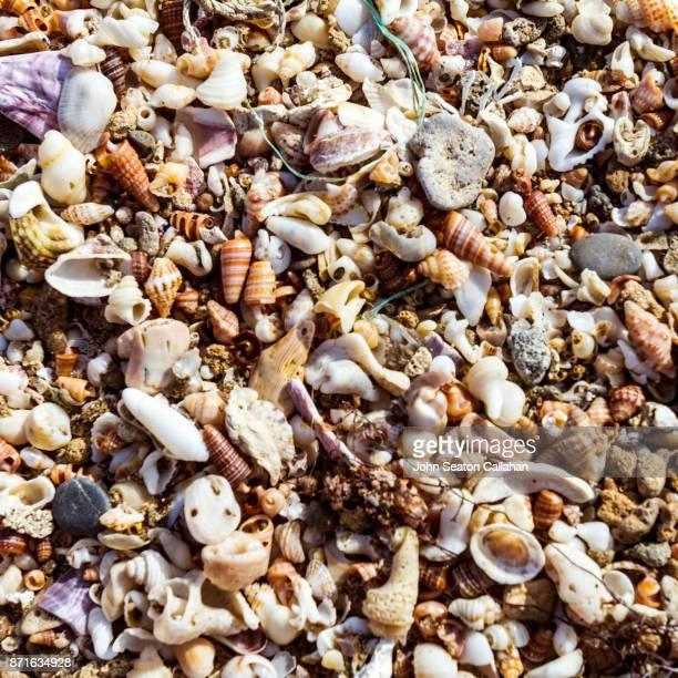 sand and shells on diu island - parte do corpo animal - fotografias e filmes do acervo