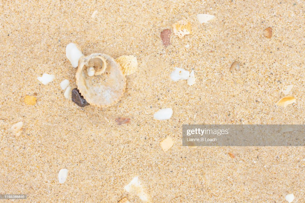 Sand and Shells : Stock Photo
