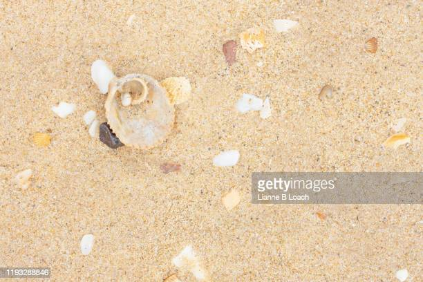 sand and shells - lianne loach stock pictures, royalty-free photos & images