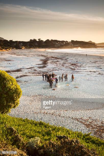 sand beach by the pacific ocean coastline in carmel california near monterey - pebble beach california stock pictures, royalty-free photos & images