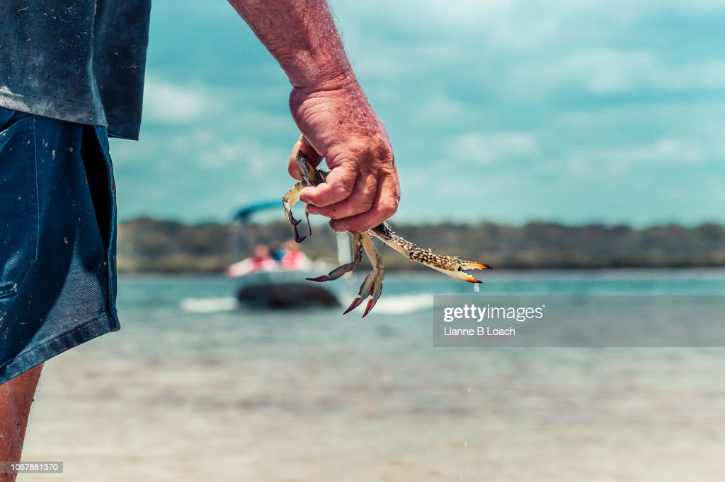 Sand Crab : Stock Photo