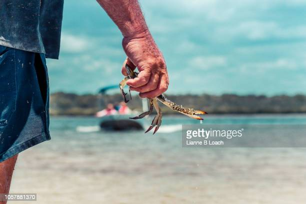 sand crab - lianne loach stock pictures, royalty-free photos & images