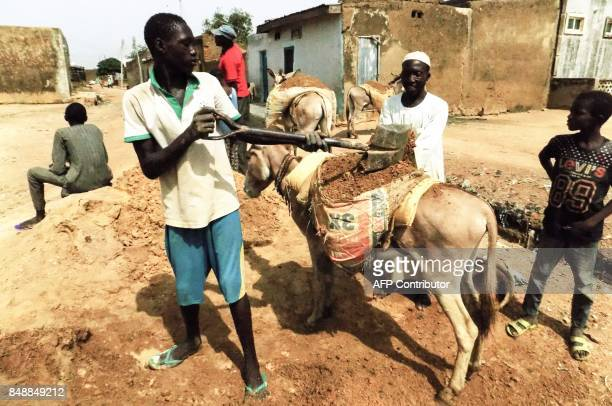 Sand diggers load sand onto donkeys at a sand excavation site in Ladanai village on the outskirts Kano in northern Nigerian on August 15 2017 In Kano...