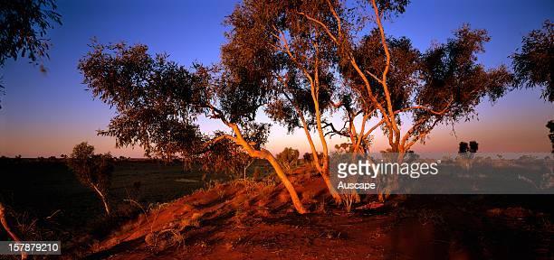 Sand dune countryCanning Stock Route Great Sandy Desert, Western Australia.