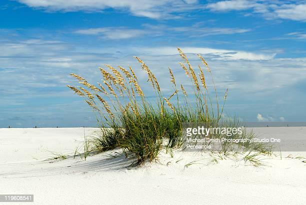 sand dune, santa rosa island - pensacola beach stock pictures, royalty-free photos & images