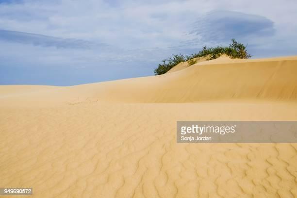 Sand dune, shifting dunes El Jable, nature park Park Corralejo, Fuerteventura, Canary Islands, Spain