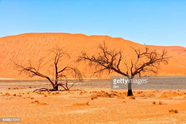 Sand dune, Sossusvlei, Namib Desert, Namibia