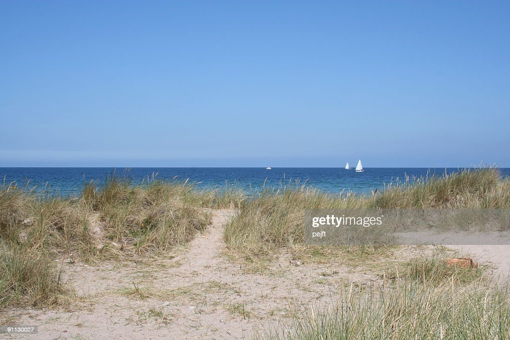 Sand dunes and beach : Stock Photo