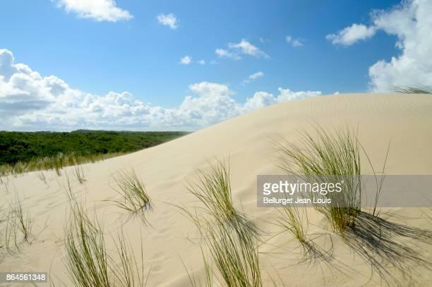 Sand dunes and grass. Atlantic beach