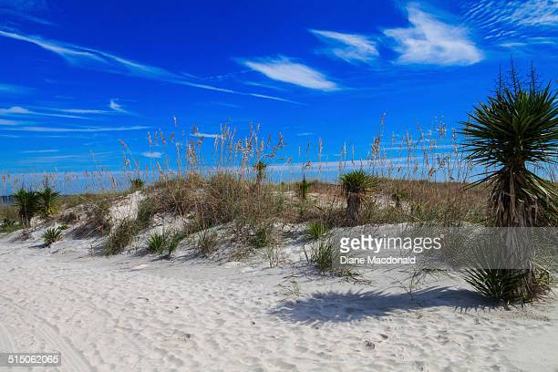 Sand dunes at Jacksonville Beach, Florida