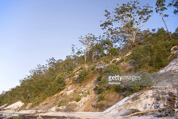 Sand dunes at North White Cliffs subject to constant erosion by water Fraser Island Queensland Australia