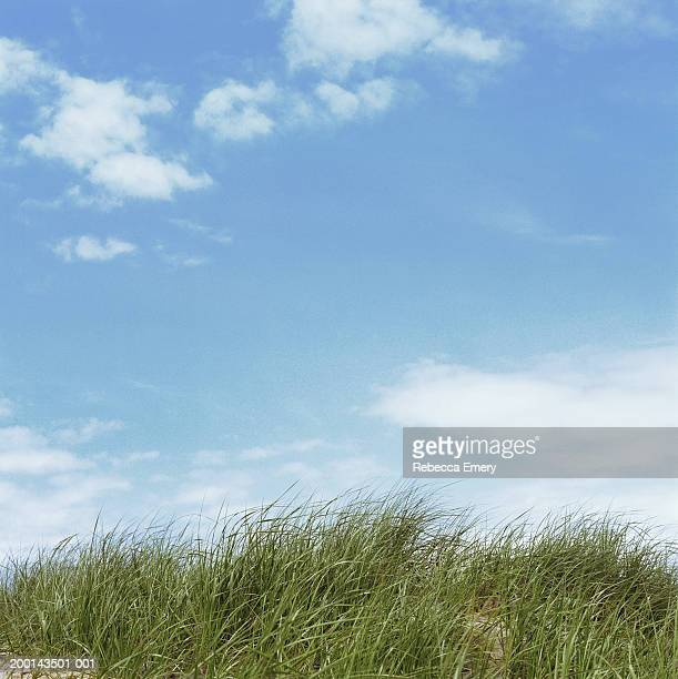sand dunes below blue sky - emery stock photos and pictures
