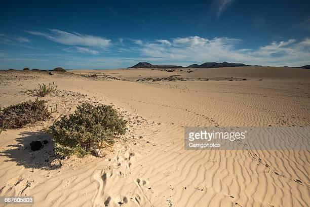 Sand dunes, Fuerteventura, Canary Islands