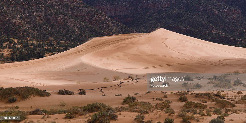 Sand dunes in a desert : Stock Photo