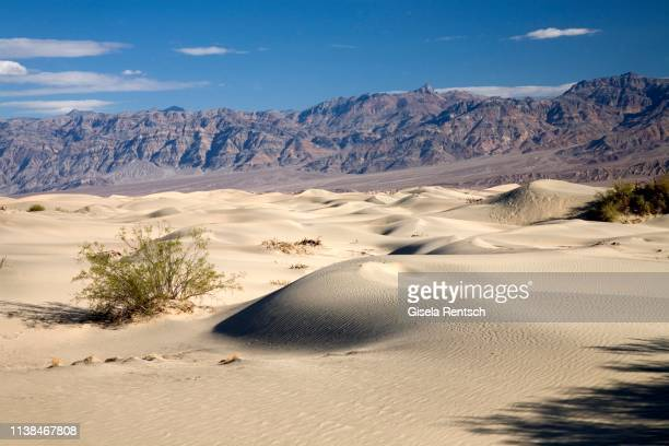 sand dunes in death valley, california, usa - death valley photos et images de collection