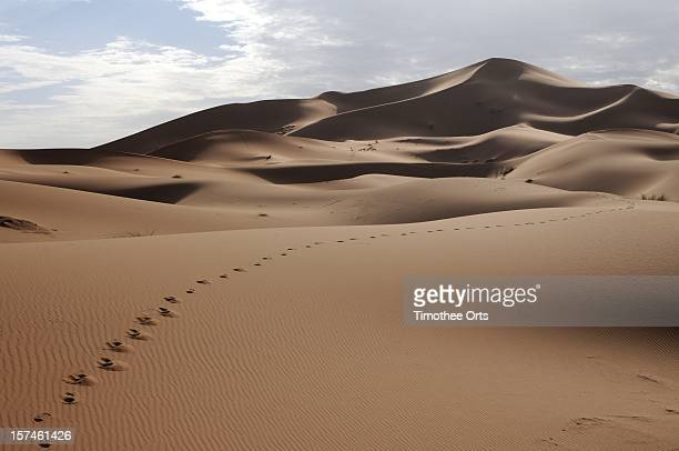 sand dunes in moroccan sahara - timothee stock pictures, royalty-free photos & images