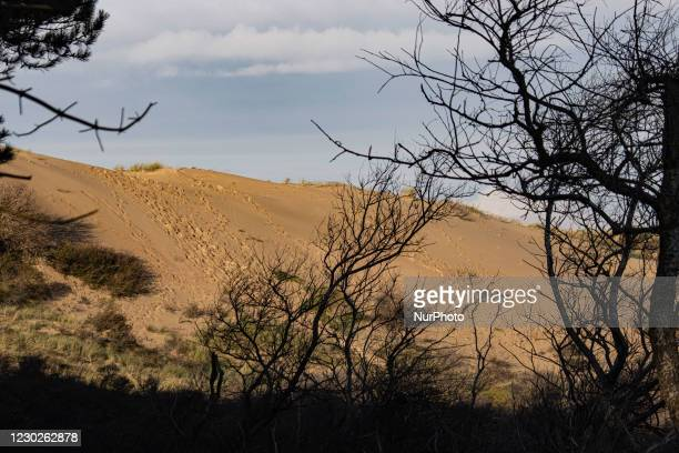 Sand dunes in Nationaal Park Zuid-Kennemerland is a Dutch National Park between Bloemendaal and the North Sea Canal established in 1950, near...