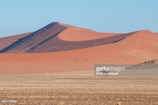 Sand dunes in Sossuvlei. Namib Desert, Namibia.