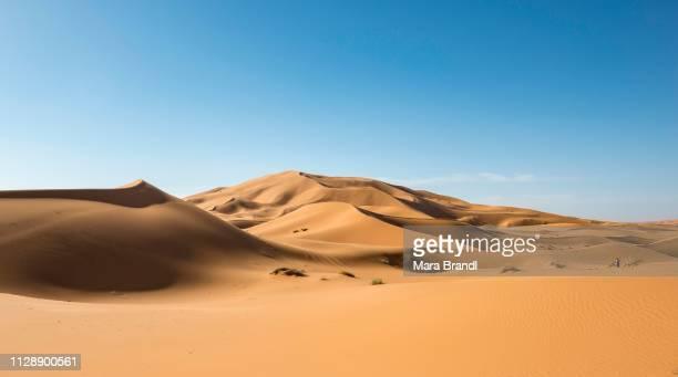 Sand dunes in the desert, dune landscape Erg Chebbi, Merzouga, Sahara, Morocco