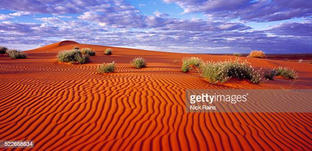 Sand dunes in the Simpson Desert