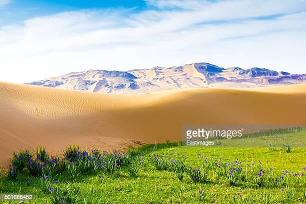 Sand dunes near lake in Tengger desert