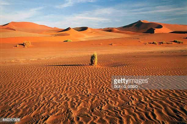 Sand dunes near Sossusvlei NamibNaukluft National Park Namib Desert Namibia