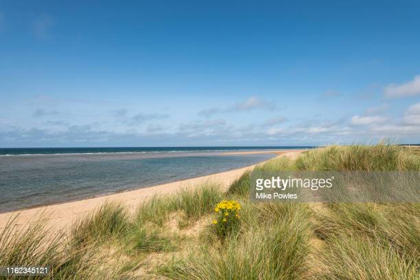 sand dunes norfolk coastline norfolk - beach stock pictures, royalty-free photos & images