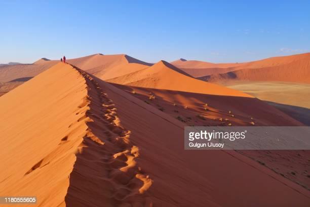 sand dunes of namibian desert, dune 45 - ナミブ砂漠 ストックフォトと画像