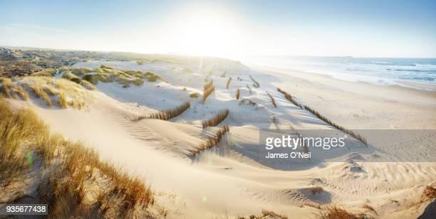 sand dunes with new breakers planted, peniche, portugal - portugal fotografías e imágenes de stock