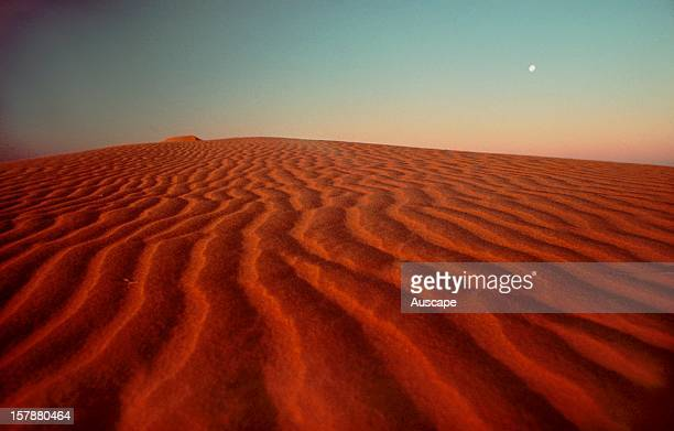 Sand duneSimpson Desert South Australia
