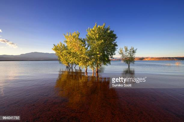 sand hollow state park at sunset, utah - sandy utah stock pictures, royalty-free photos & images