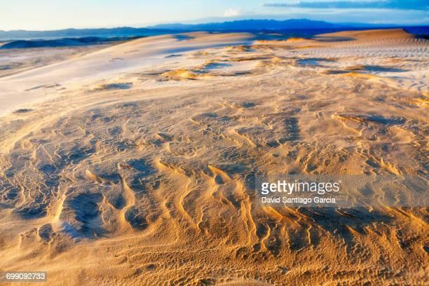 sand. platja del fangar (fangar beach). ebro delta. tarragona province. spain - delta del ebro fotografías e imágenes de stock