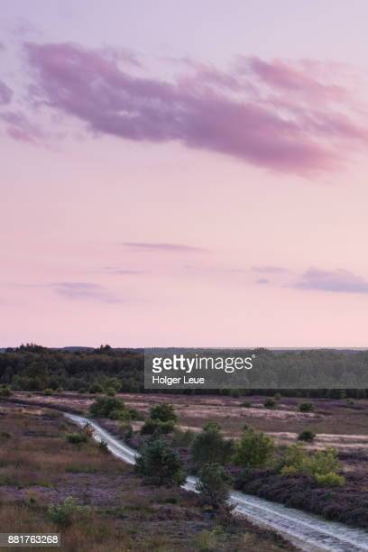 sand track through engdener wüste / heseper moor peat bog lands at nordhorn range at sunset, near nordhorn, emsland, lower saxony, germany - wüste stock pictures, royalty-free photos & images